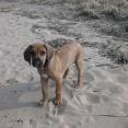 Debbie på strandpromenad