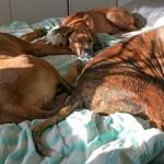 Dexter med Kingly och hundkompis