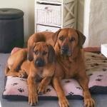 Dexter & Kingly
