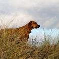 Esther spanar ut mot havet