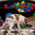 Lek med bollar 2