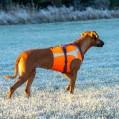 Husse, jag är en fågelhund :)