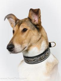 Keltiska hundar - Breda halsband