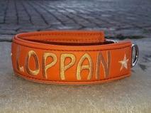 Loppan-Orange skinn med guld text.  Halsbandets bredd 4 cm. Välj variant storlek, bredd & symboler i meny:n