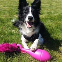 Fina BC tjejen Exxi med sin nya favvo leksak. 75 cm lång lång bungee med kaninskinn i cerise. Mjuk gummi kägla som har samma pysljud som den mjuka röda kongen. En leksak som kan trigga igång de flesta hundar.