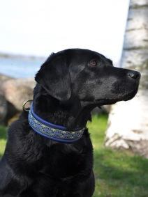 Abby VM-lydnad, Alviskt Blå-guld alla alviska halsbanden är Totalt  ca  3,2 cm.