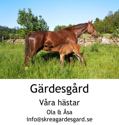Avelshästar på Skrea Gärdes Gård  utanför Falkenberg