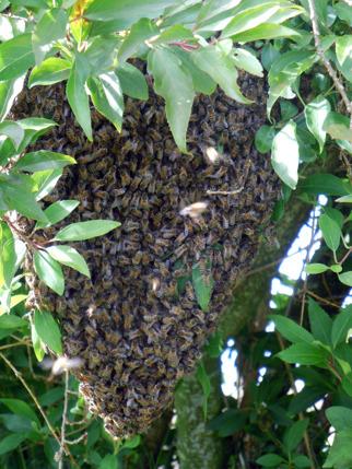 Lokalt producerad honung från egna bin - Skrea Gärdesgård i Falkenberg