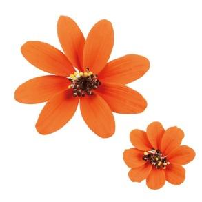 Margerit - Orange - Margrit orange 5 cm