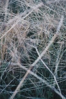 FOTOPRINT WILD -