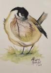 BLYG akvarell 10x15 cm 500:-