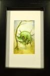 BUMLING akvarell 10x15 cm 2500:-