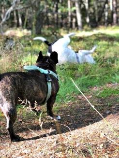 Problemutredning hundpsykolog