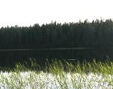 Det vakar nästan alltid på sjöarna i kvällningen.
