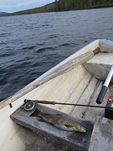 Niohektosöring på Claret Dabbler på Burusjön 7/7 - 2017.