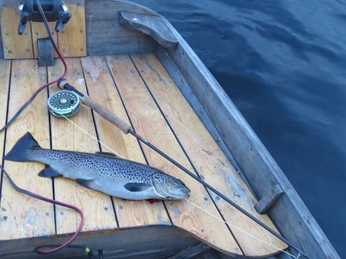 Fin medelstorlek på öringen i Näcksjön 1,2 kg, Claret Dabbler, 20/6 2018.