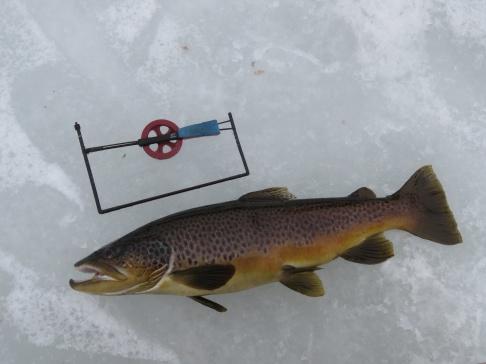 Efter en stunds trugande högg plötsligt den här på en liten mormyska (2,1 kg Öresjön Idre, 2020-01-18)..
