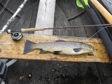 2021-06-21 Vulgataöring 1,6 kg, Näcksjön, Claret Dabbler..
