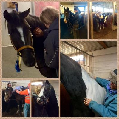 Kurs i hästmassage för husbehov på Färsta ridstadion 2015