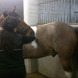 Stretch ponny Färsta