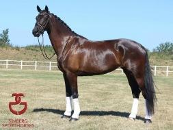 simberg.sporthorses.horsesforsale.6yo