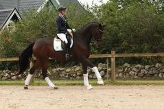 simberg.elenore.sporthorses.stall.horses.for.sale.dressurpferd
