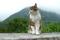 Fin katt i Hallstatt! © Austria Travel - Rusner
