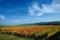 Höst i vingårdarna i Langenlois © Österreich Werbung - Himsl