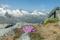 Purpurbräcka på Rotbachlspitze (2.897 m) © Austria Travel - Rusner