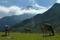 Från Ahornbahn upp till Edelhütte © Austria Travel - Rusner