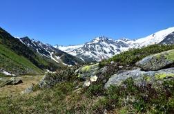 Alpsippa - Alpen-Kuhschelle (Bild: Tore Vefferstad, Gasteinerdalen)