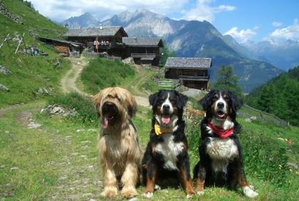 Hundar gillar att vandra i Österrike och Alperna!