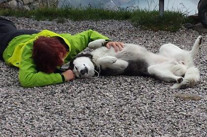 Olpererhüttes egen Husky © Austria Travel - Rusner
