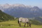 Sound-of-Music-vandring längs Dachstein © Austria Travel Rusner