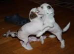 Tova och Ester leker