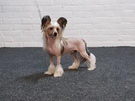 Baxter, 11 månader