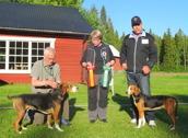 HAMILTON BIR SEJCH SEUCH Lex Bluff äg, Lars O Törnqvist, BIM SEJCH SEUCH Silva äg, Sigge Larsson Luleå