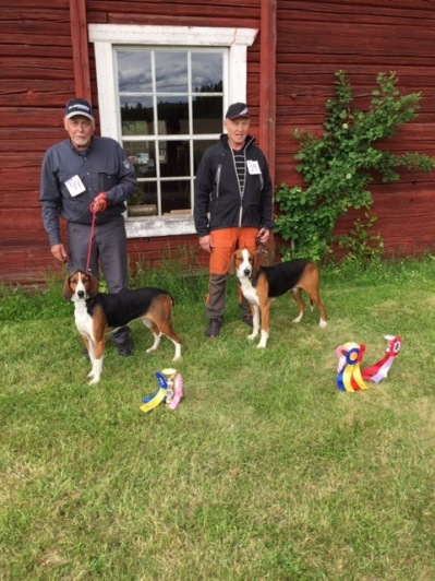 Finsk Stövare BIM Flatmarkens Bonus-Busa äg, Tomas Wiklund Vännäs    BIR Alkärrets Akko äg, Arnold Holmgren Lycksele