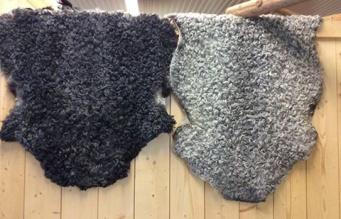 Stora fårskinn (bagg- och tackskinn)