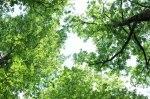 trädkrona (2)