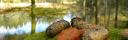 Naturen i Vildmarksbyn