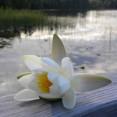 Ta ett kvällsdopp i sjön