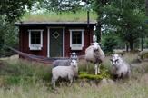 Romantiskt boende i Bara Älska stugan - Falkenberg
