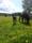 islandsföl slofallet