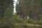 turridning i skogen