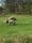 slofallets islandshästar