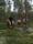 islandshäst, turridning