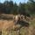 #islandshästar slofallet