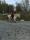 ridskola islandshäst