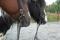 hästar, ridläger